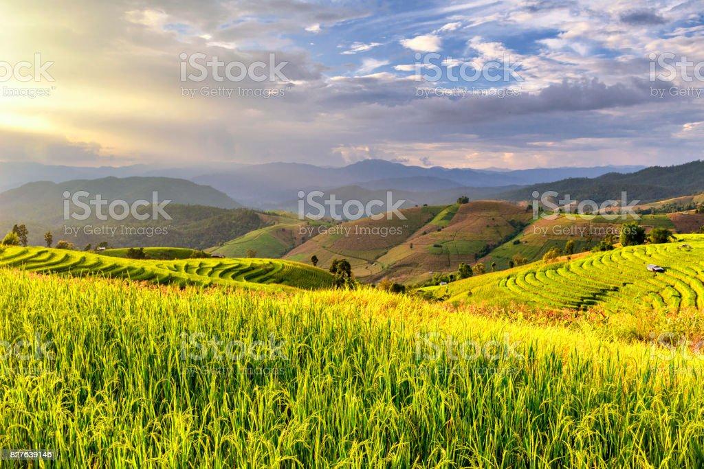 Terrace Rice Field at Pa Bong Piang Hill Tribe Village near Inthanon Mountain, Chiangmai stock photo