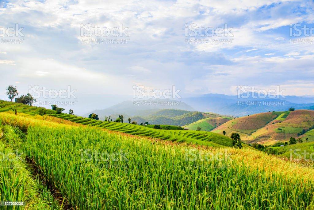 Terrace Rice Field at Sunset, Chiangmai, Thailand stock photo