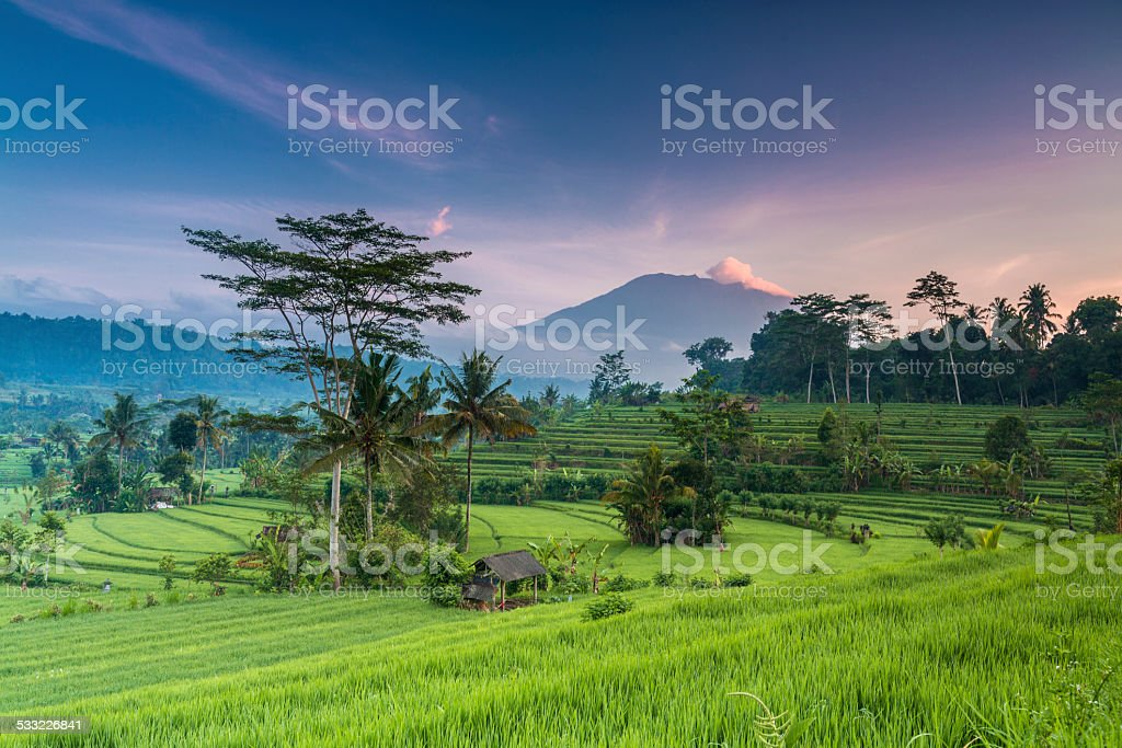 Terrace rice field in Bali in Indonesia stock photo