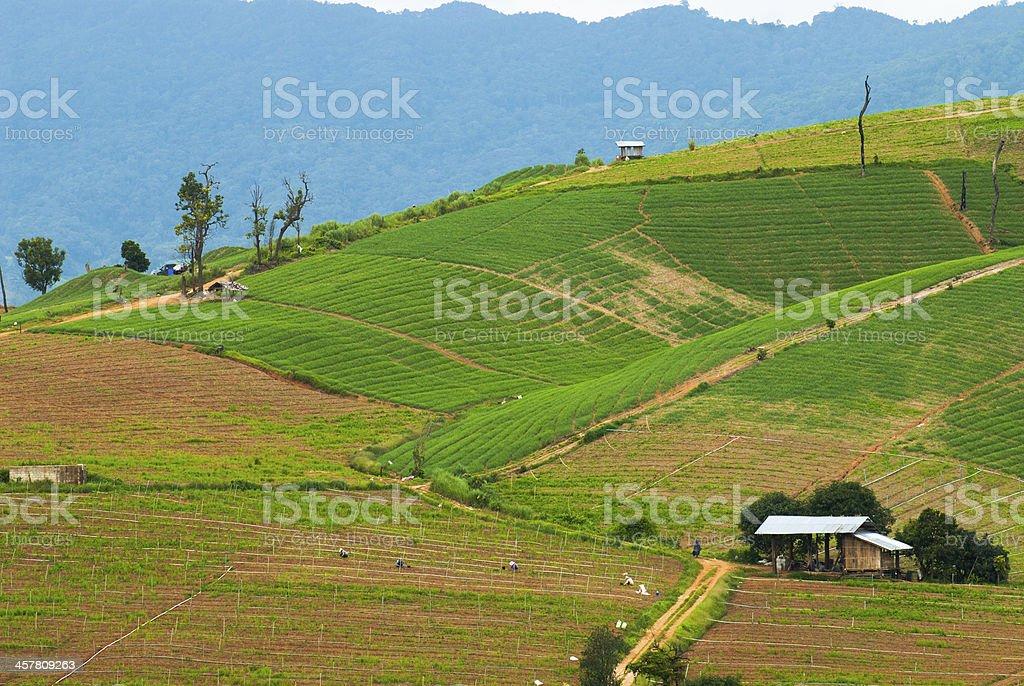 Taras pól ryżowych 3 zbiór zdjęć royalty-free