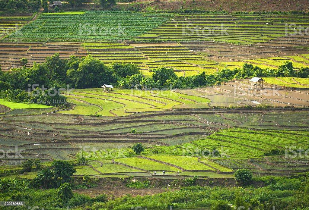 Taras pól ryżowych w Mae Chaem Okręg Chiang Mai, Tajlandia zbiór zdjęć royalty-free