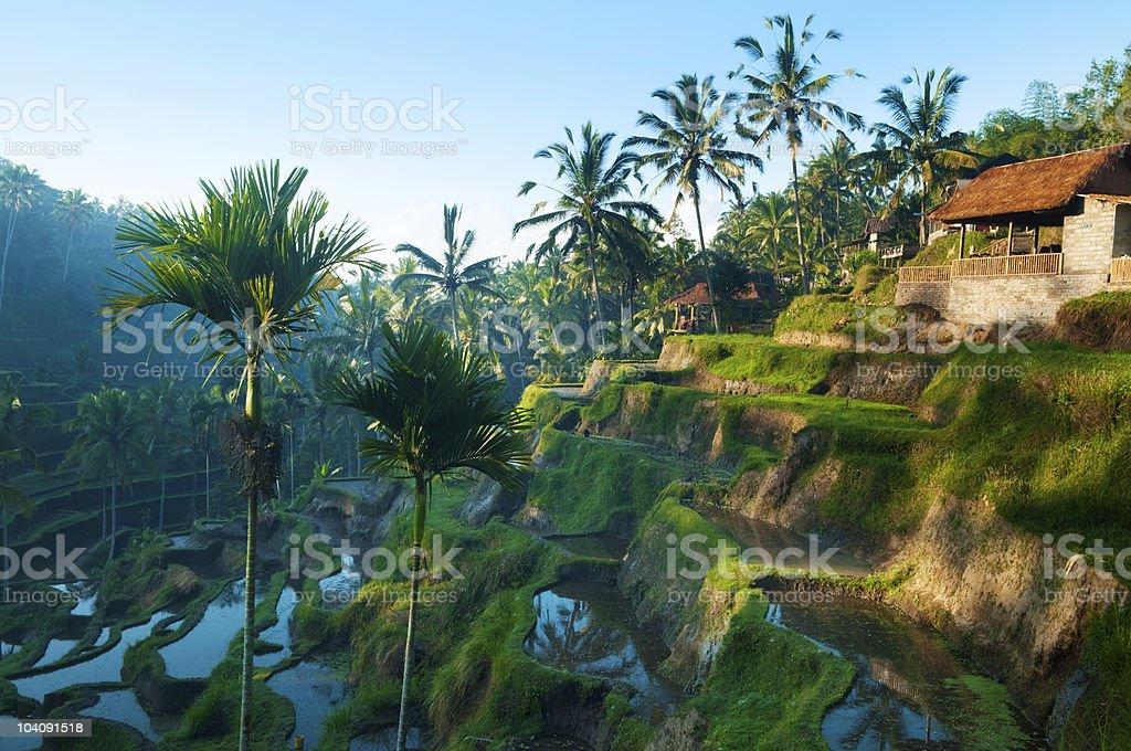 Terrace rice fields stock photo
