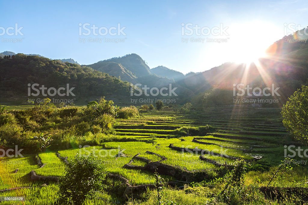 Terrace ricefield in Flores island, Indonesia stock photo