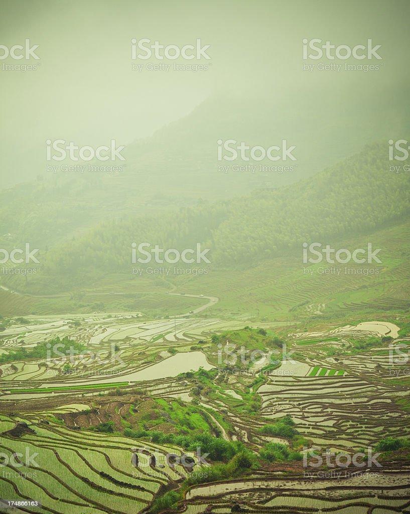 Terraced Field stock photo