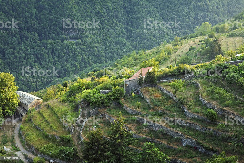 terraced fields in the forest covered Ligurian Alps, Italy stock photo