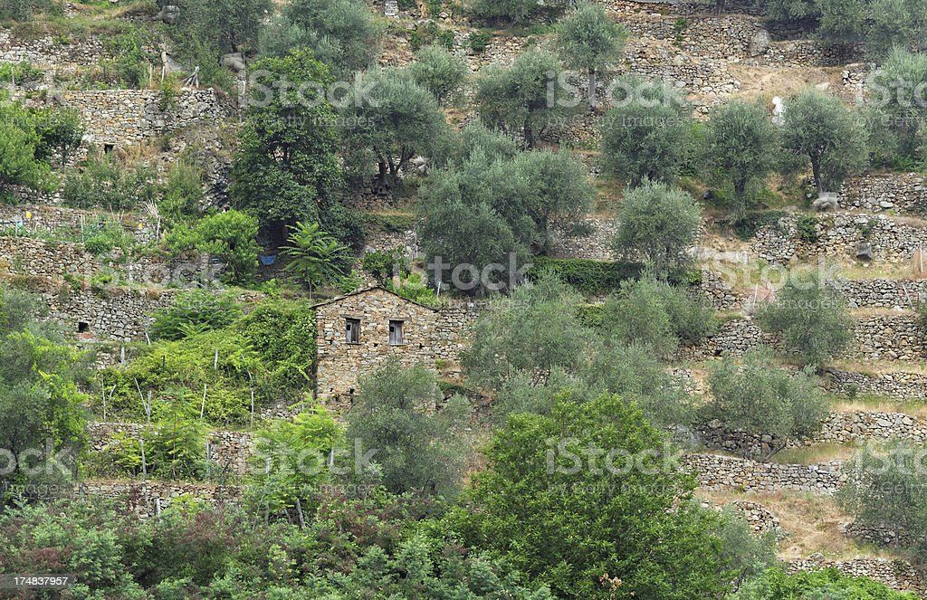 terraced fields in the Ligurian Alps, Italy stock photo