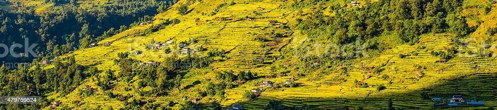 Terraced fields of green crops mountainside panorama Annapurna Himalayas Nepal stock photo