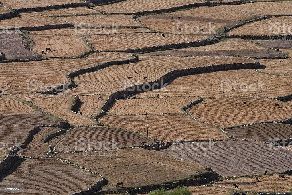 Terraced fields royalty-free stock photo