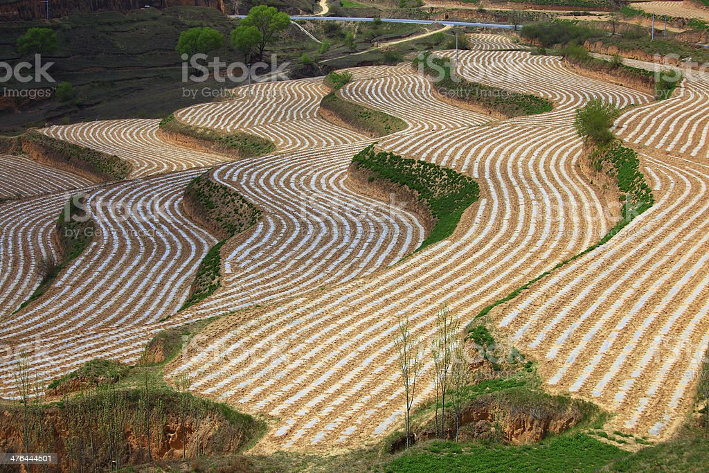 Terraced fields royalty-free stock photo