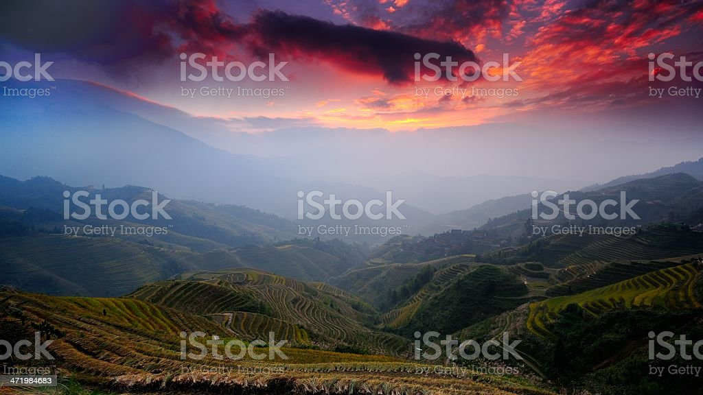 Terraced fields rosy dawn stock photo