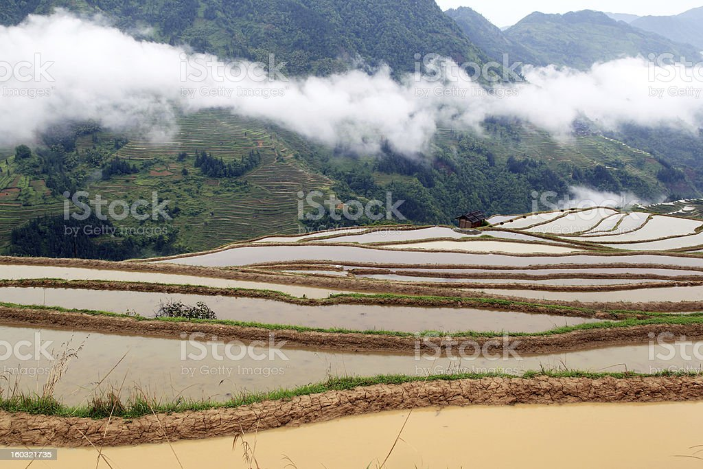 Terraced landscape royalty-free stock photo