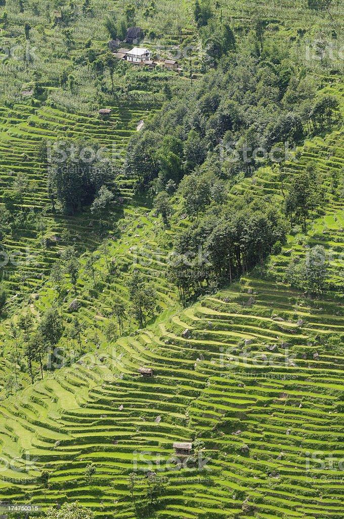 Terraced nepal hillside royalty-free stock photo