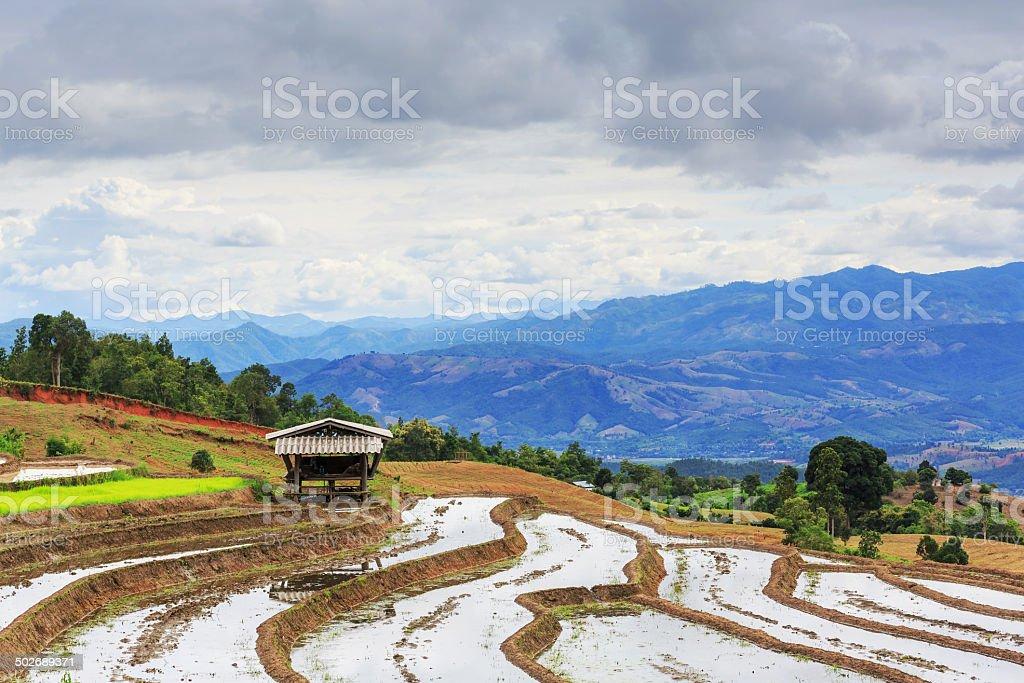 Terrasse Paddy Field in Mae-Jam Village, Chaingmai Provinz, T Lizenzfreies stock-foto