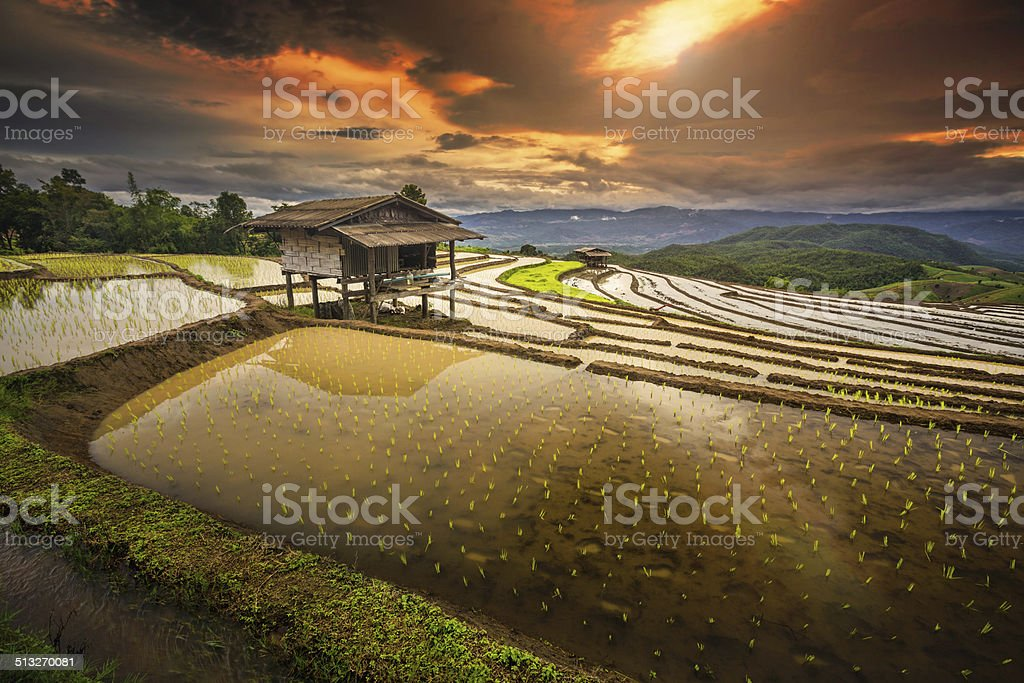 Terrasse Paddy Field in Mae-Jam Village Lizenzfreies stock-foto