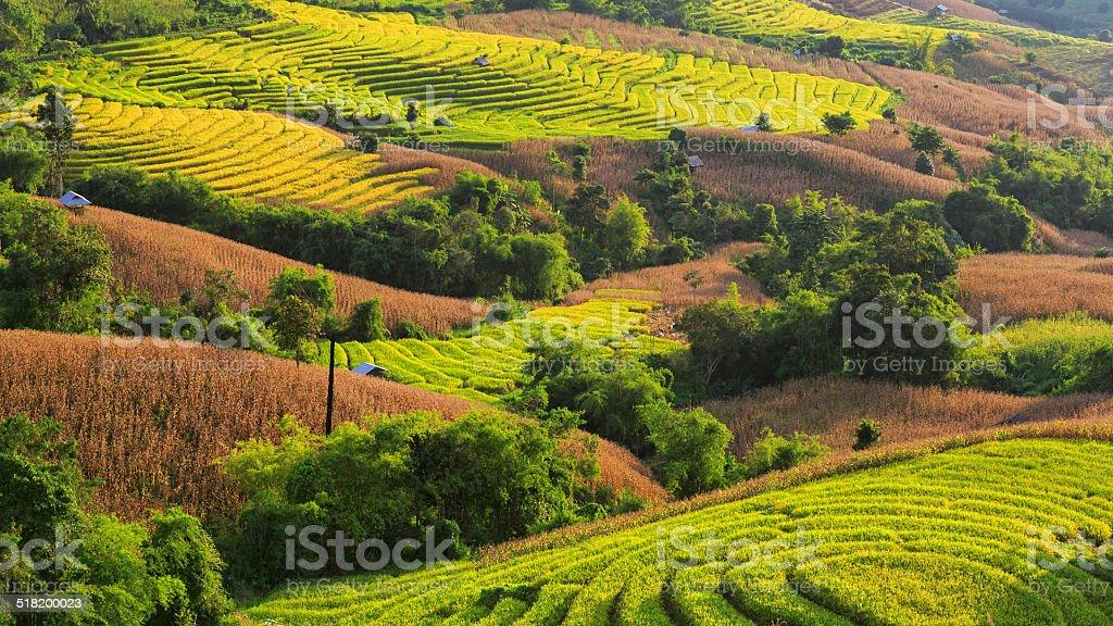 Terrasse Paddy Field in Mae-Jam Village Lizenzfreies stock-foto