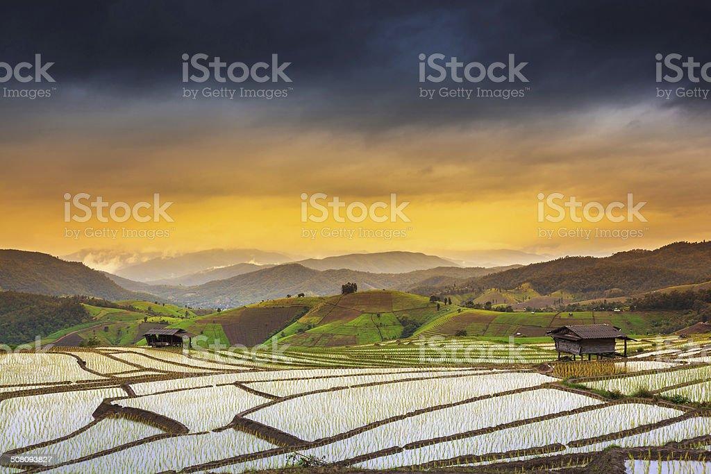 paddy field auf der sunset Terrasse Lizenzfreies stock-foto
