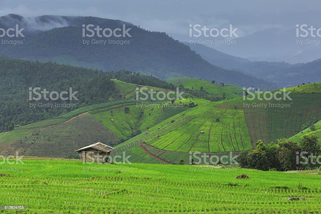 Terrasse Paddy Field Lizenzfreies stock-foto