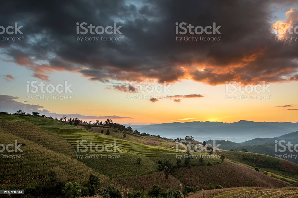 Terraced Rice Field at Sunset stock photo