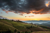 Terraced Rice Field at Sunset