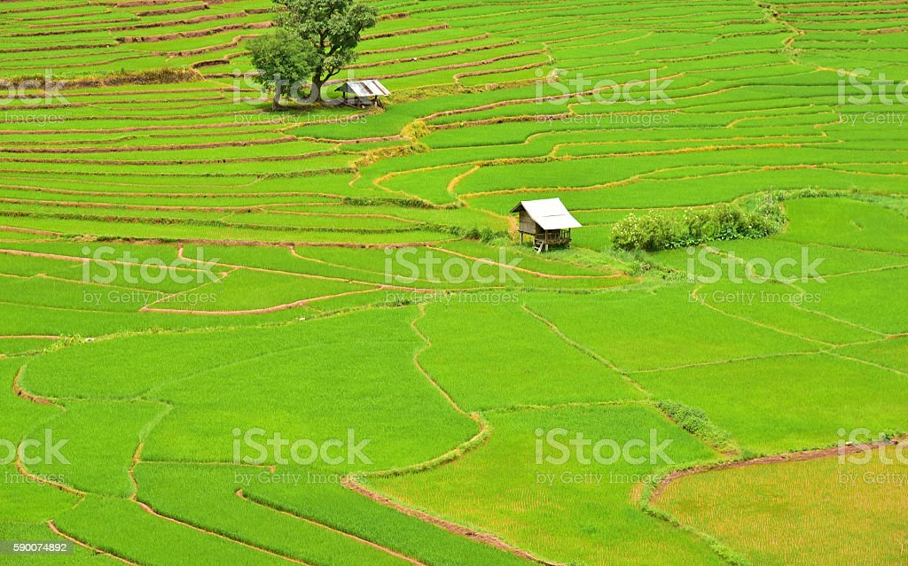 Terraced rice field in Chaloem Phra Kiat district stock photo