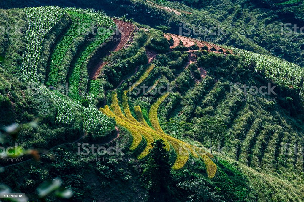 Terraced rice field in Ha giang province, Vietnam stock photo