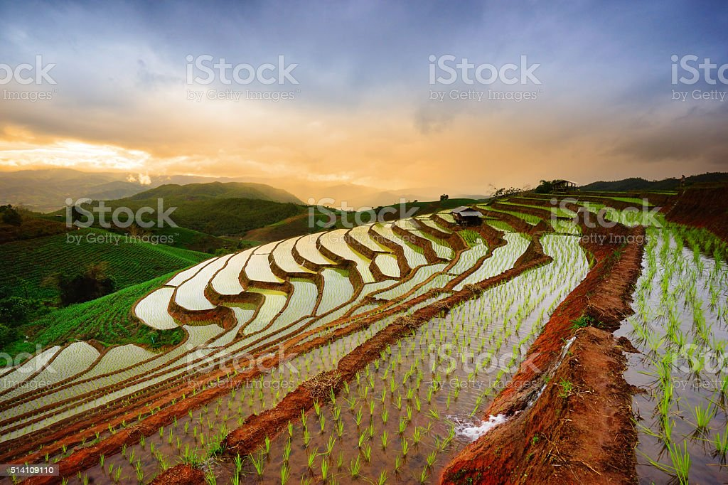 Terraced Rice Field in Mae Cham district. Chiangmai province. stock photo