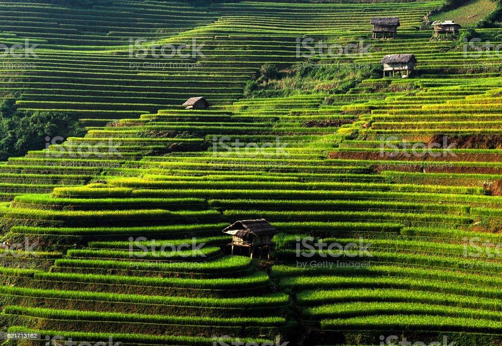 Terraced rice field in mu cang chai, vietnam stock photo
