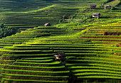 Terraced rice field in mu cang chai, vietnam