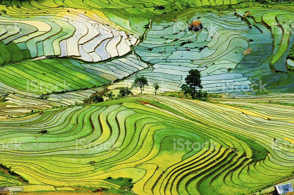 Terraced rice field in Vietnam stock photo