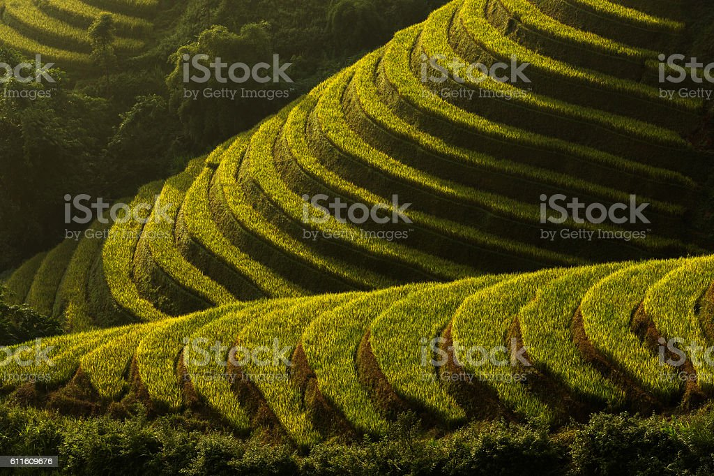 Terraced rice field of Mu Cang Chai, Yenbai, Vietnam stock photo