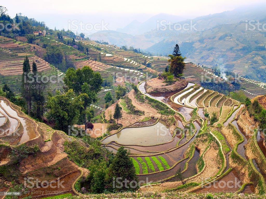 Terraced Rice Field stock photo