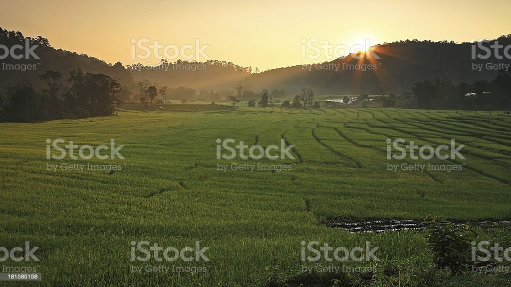 Terraced Rice Field with sunbeam at Sunrise royalty-free stock photo