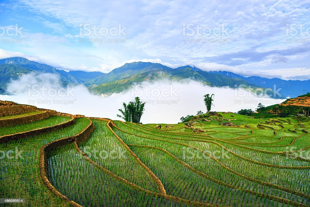 Terraced rice fields in Sapa, Lao Cai, Vietnam stock photo