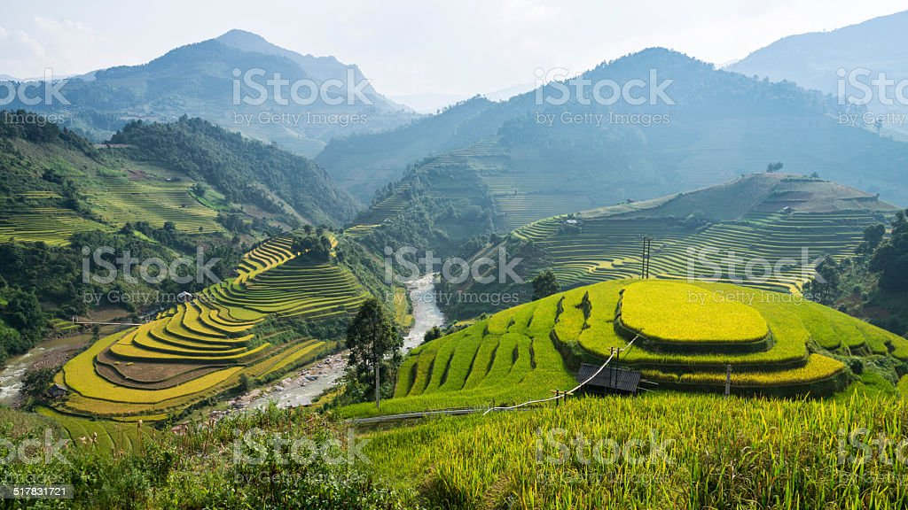 Terraced Rice Fields in Vietnam stock photo