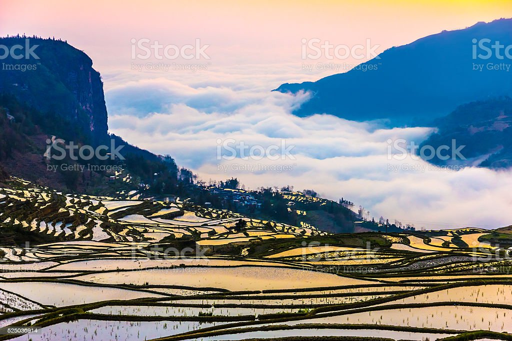 Terraced Rice Fields in Water Season South China at Sunset stock photo