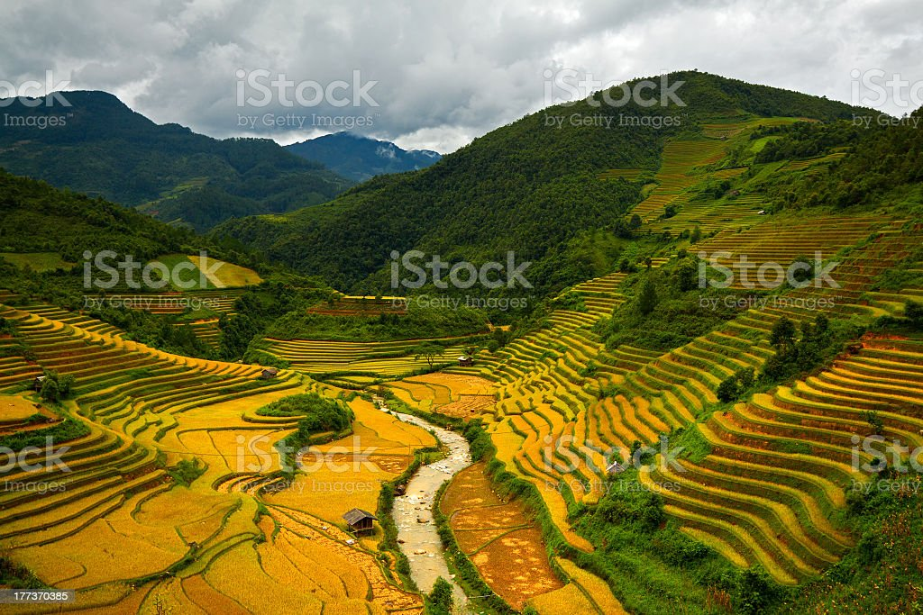 Terraced rice fields royalty-free stock photo