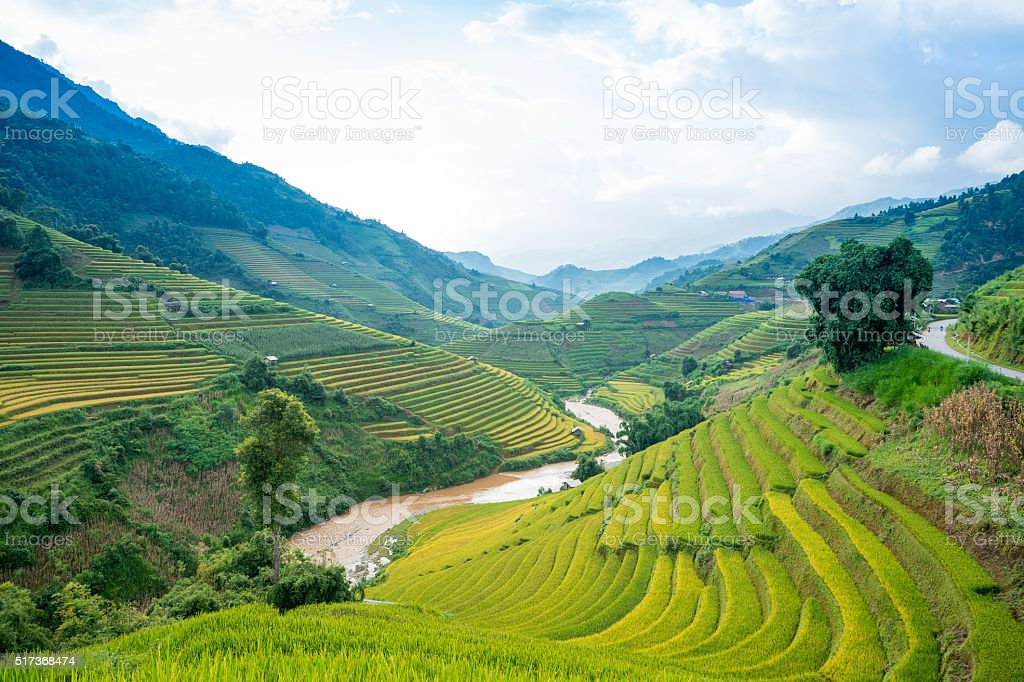 Terraced rice fields stock photo
