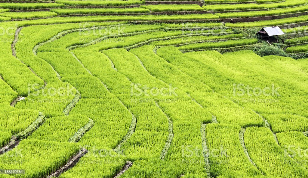 Terraced rice fields steps. royalty-free stock photo