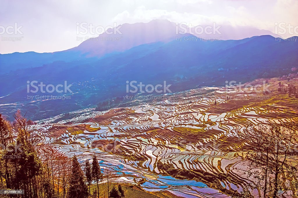 Terraced Rice Fields Water Season in South China at Sunset stock photo