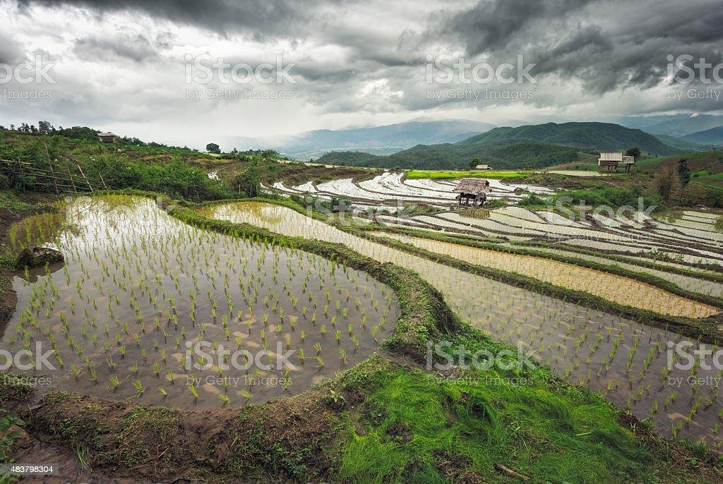 rice rield Terrasse Lizenzfreies stock-foto