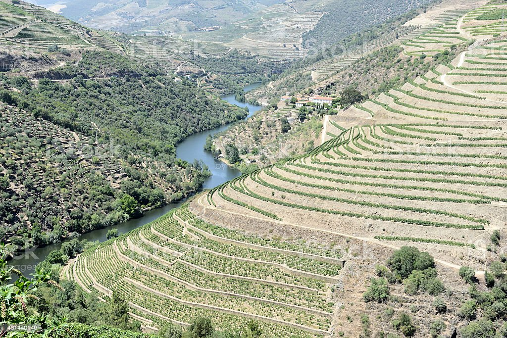 Terraced vineyards in Douro Valley stock photo
