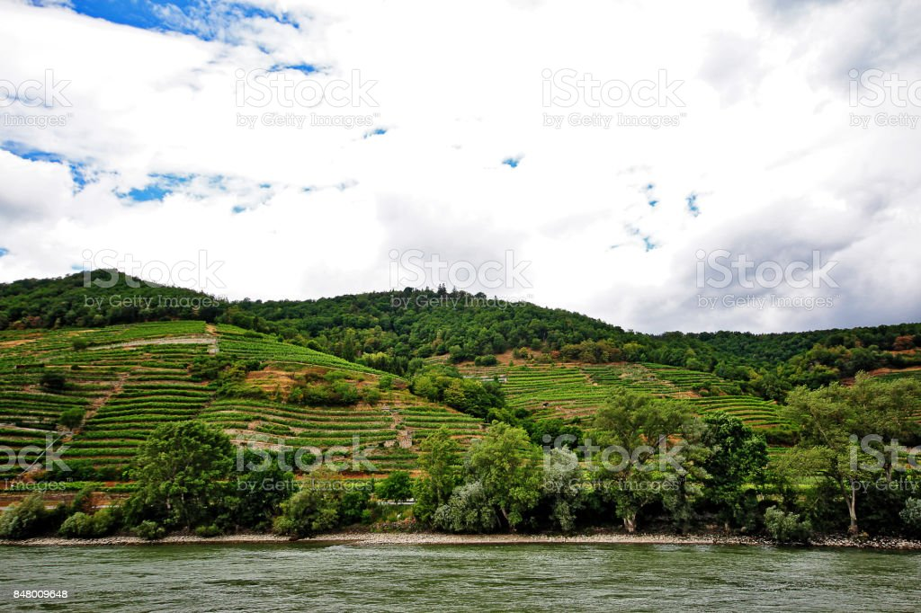 Terraced vineyards in Wachau Valley, an Austrian valley with a picturesque landscape formed by the Danube river located midway between the towns of Melk and Krems in Lower Austria stock photo