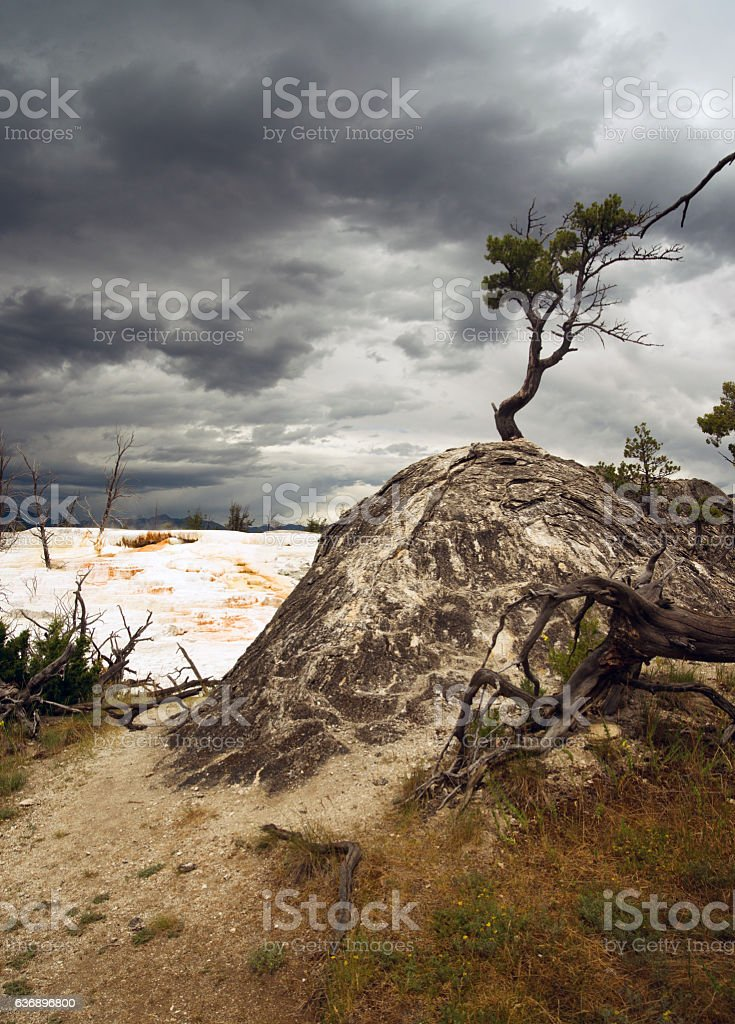 Terraces Mammoth Hot Springs Yellowstone National Park stock photo