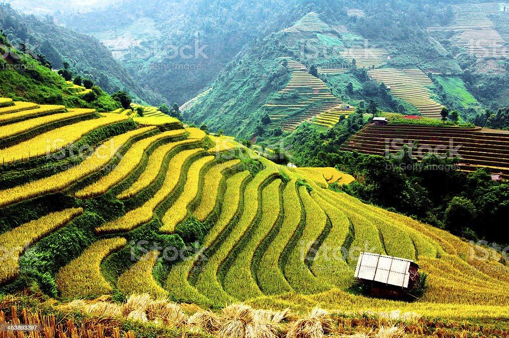 Terraces rice field in Northwest of vietnam stock photo