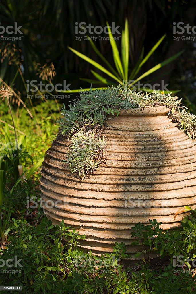 terracotta pot royalty-free stock photo