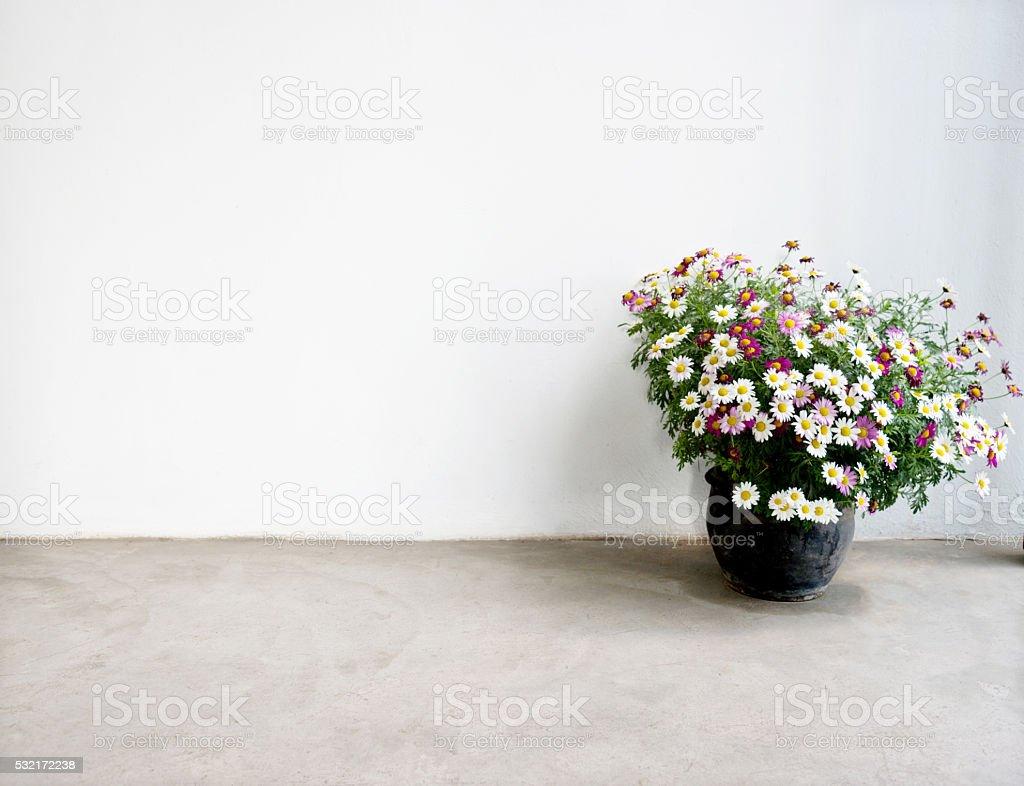 Terracotta pot with daisy on floor stock photo