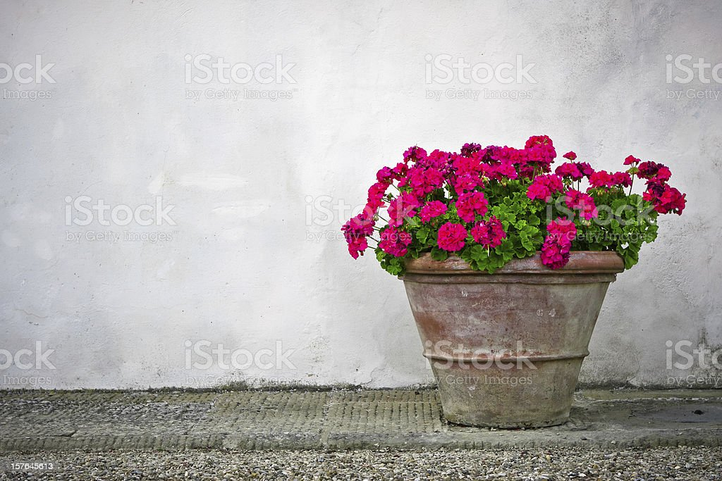 Terracotta Pot with Geranium on White Wall, Tuscany stock photo