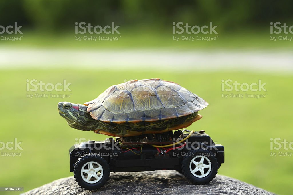 Terrapin Turtle on Toy Car stock photo