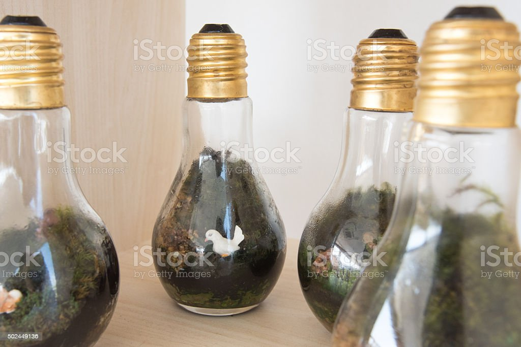 Terrarium in glass container stock photo