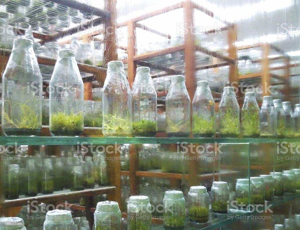 terrarium plants in jars royalty-free stock photo